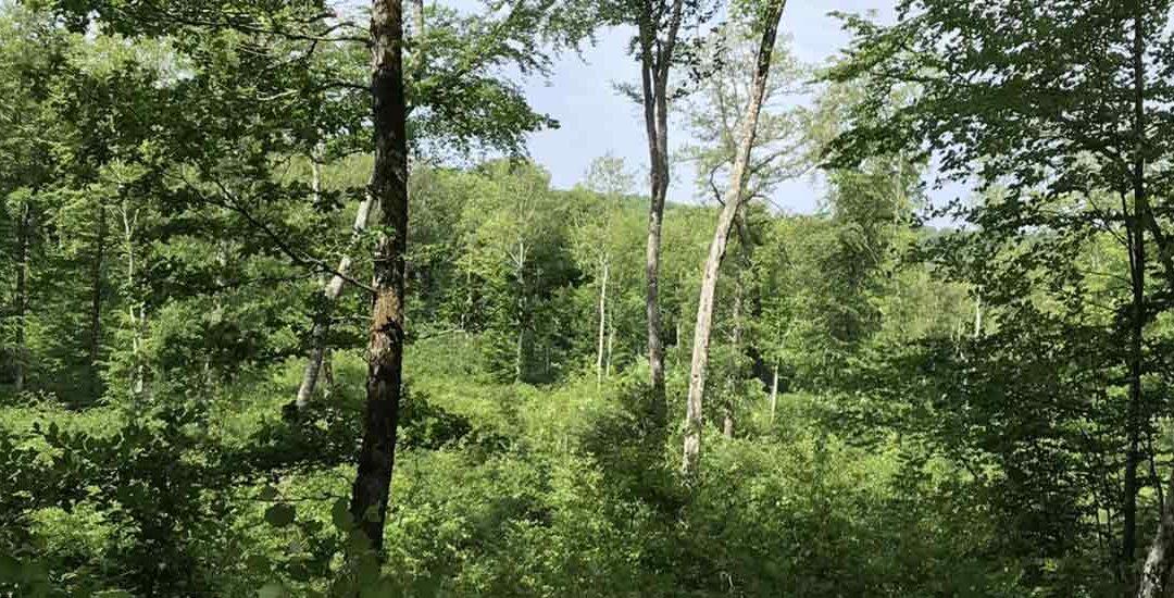 Matinée découverte de la forêt intercommunale