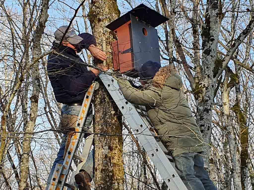 Pose d'un nichoir sur un arbre