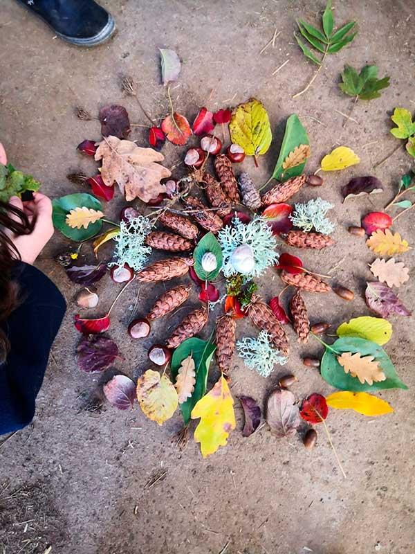 Composition de feuilles, glands et pommes de pin