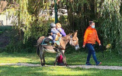 Le Relais petite enfance rencontre les ânes